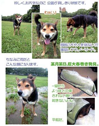 P_miso_081013